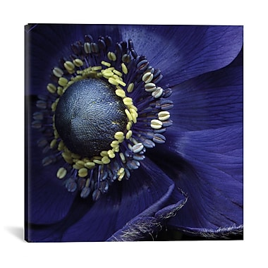 Red Barrel Studio Anemonissimo! Photographic Print on Wrapped Canvas; 37'' H x 37'' W x 0.75'' D