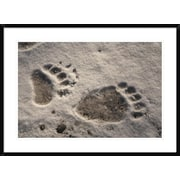 'Grizzly Bear Front and Back Paw Prints, Katmai National Park, Alaska' Framed Photographic Print