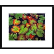 Global Gallery 'Yellow Pond Lily Close Up of Pads, North America' Framed Photographic Print