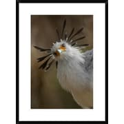 Global Gallery 'Secretary Bird Portrait, Native To Africa' Framed Photographic Print by