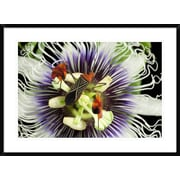 'Flag-Footed Bug on Passion Flower, Barro Colorado Island, Panama' Framed Photographic Print