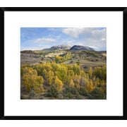 Global Gallery 'Quaking Aspen Forest and Chair Mountain' Framed Photographic Print