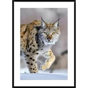 Global Gallery 'Eurasian Lynx Walking Through the Snow, Norway' Framed Photographic Print