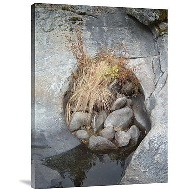 Naxart 'Sierra Nevada Forest 2' Photographic Print on Canvas; 24'' H x 18'' W x 1.5'' D