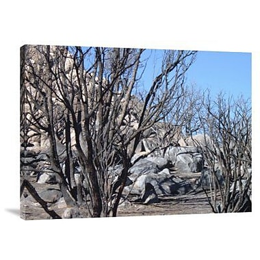 Naxart 'Burned Forest 4' Photographic Print on Canvas; 30'' H x 40'' W x 1.5'' D