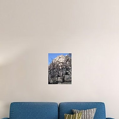 Naxart 'Burned Forest 5' Photographic Print on Canvas; 32'' H x 24'' W x 1.5'' D