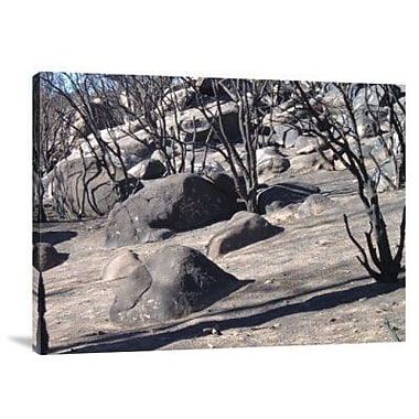 Naxart 'Burned Forest 7' Photographic Print on Canvas; 12'' H x 16'' W x 1.5'' D