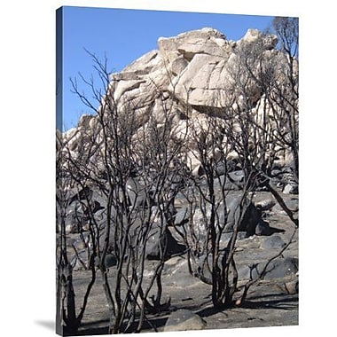 Naxart 'Burned Forest 3' Photographic Print on Canvas; 32'' H x 24'' W x 1.5'' D