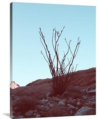 Naxart 'Desert Plant' Photographic Print on Canvas; 40'' H x 30'' W x 1.5'' D