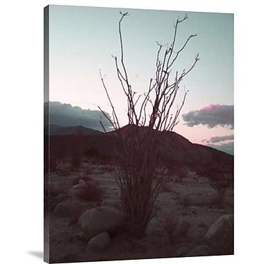 Naxart 'Desert Plants and Sunset' Photographic Print on Canvas; 16'' H x 12'' W x 1.5'' D