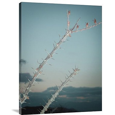 Naxart 'Plant' Photographic Print on Canvas; 16'' H x 12'' W x 1.5'' D