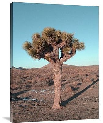Naxart 'Joshua Tree' Photographic Print on Canvas; 16'' H x 12'' W x 1.5'' D