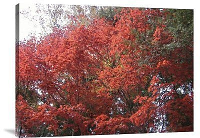 Naxart 'Red Tree' Photographic Print on Canvas; 24'' H x 32'' W x 1.5'' D
