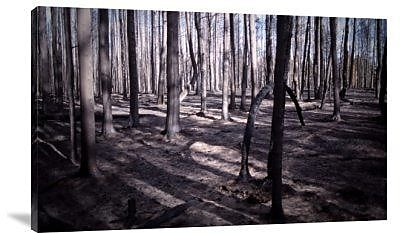 Naxart 'San Bernardino Burned Forest' Photographic Print on Canvas; 25'' H x 40'' W x 1.5'' D