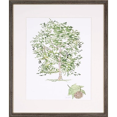 Alcott Hill 'Sycamore Tree' Framed Graphic Art Print