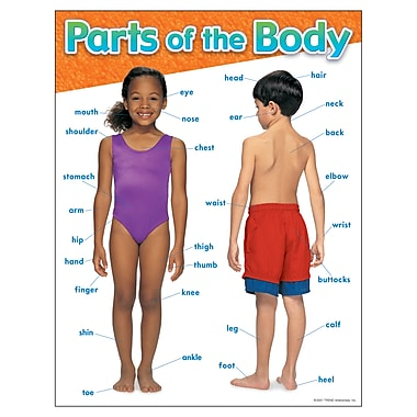 Trend Enterprises® Parts of The Body Learning Chart