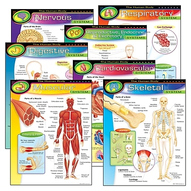 Trend Enterprises The Human Body Learning Chart, 7/Pack (T-38913)