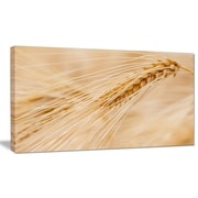 DesignArt 'Cereal Plants Barley' Photographic Print on Wrapped Canvas; 16'' H x 32'' W x 1'' D
