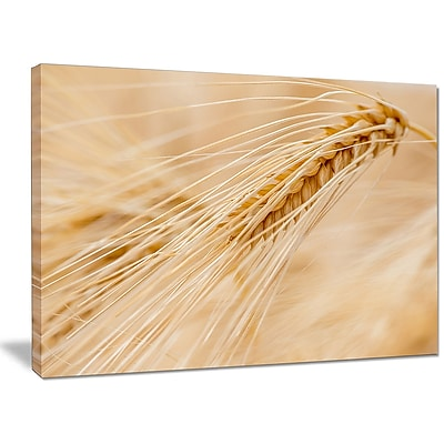 DesignArt 'Cereal Plants Barley' Photographic Print on Wrapped Canvas; 30'' H x 40'' W x 1'' D