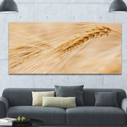 DesignArt 'Cereal Plants Barley' Photographic Print on Wrapped Canvas; 28'' H x 60'' W x 1.5'' D