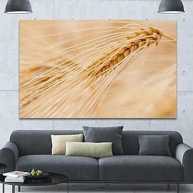 DesignArt 'Cereal Plants Barley' Photographic Print on Wrapped Canvas; 40'' H x 60'' W x 1.5'' D