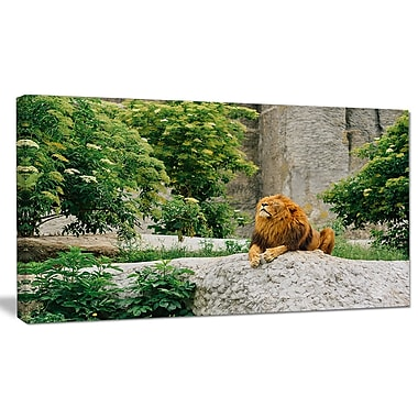 DesignArt 'Big Lion Lying On Stones in Zoo' Photographic Print on Wrapped Canvas
