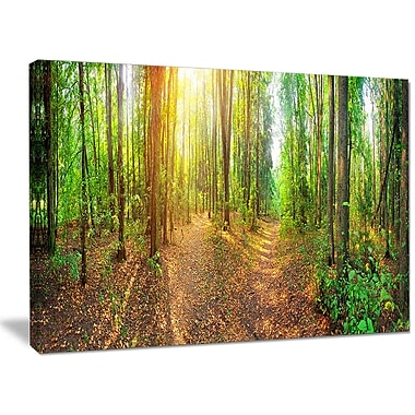 DesignArt 'Dense Forest Panorama' Photographic Print on Wrapped Canvas; 30'' H x 40'' W x 1'' D