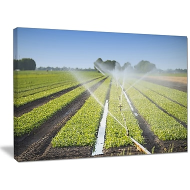 DesignArt 'Beautiful View of Crops Watering' Photographic Print on Wrapped Canvas