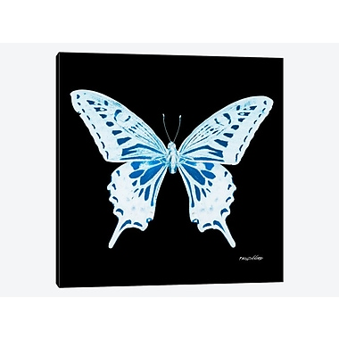 East Urban Home 'Miss Butterfly X-Ray XXIX' Graphic Art Print on Canvas; 26'' H x 26'' W x 0.75'' D