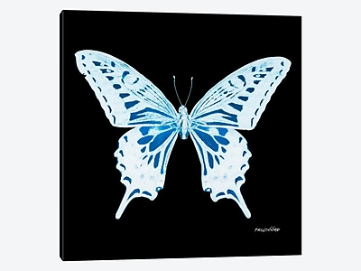 East Urban Home 'Miss Butterfly X-Ray XXIX' Graphic Art Print on Canvas; 18'' H x 18'' W x 0.75'' D