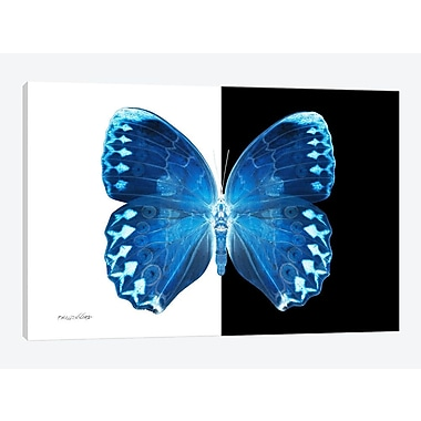 East Urban Home 'Miss Butterfly X-Ray XIX' Graphic Art Print on Canvas; 18'' H x 26'' W x 0.75'' D