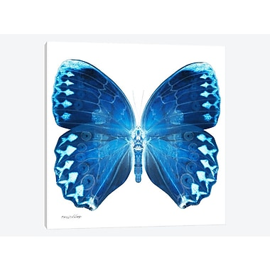 East Urban Home 'Miss Butterfly X-Ray XX' Graphic Art Print on Canvas; 12'' H x 12'' W x 1.5'' D