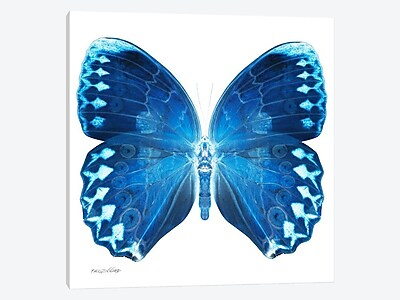 East Urban Home 'Miss Butterfly X-Ray XX' Graphic Art Print on Canvas; 18'' H x 18'' W x 1.5'' D