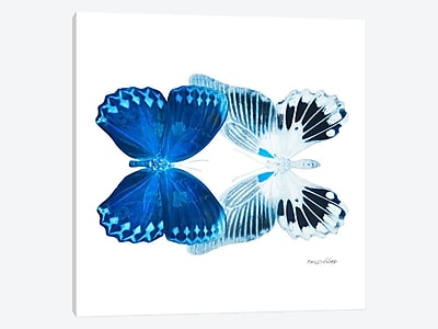East Urban Home 'Miss Butterfly X-Ray XIII' Graphic Art Print on Canvas; 12'' H x 12'' W x 1.5'' D