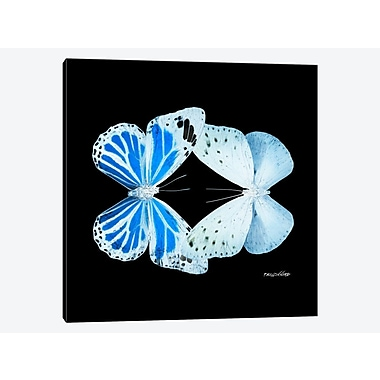 East Urban Home 'Miss Butterfly X-Ray XV' Graphic Art Print on Canvas; 37'' H x 37'' W x 1.5'' D