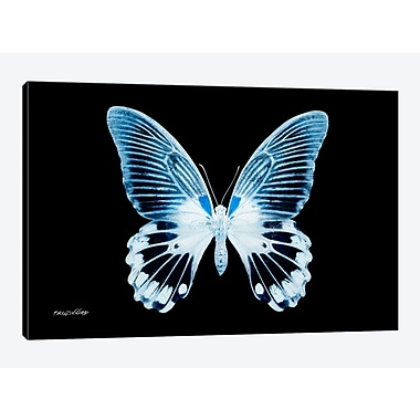 East Urban Home 'Miss Butterfly X-Ray I' Graphic Art Print on Canvas; 18'' H x 26'' W x 0.75'' D