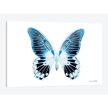 East Urban Home 'Miss Butterfly X-Ray II' Graphic Art Print on Canvas; 26'' H x 40'' W x 0.75'' D