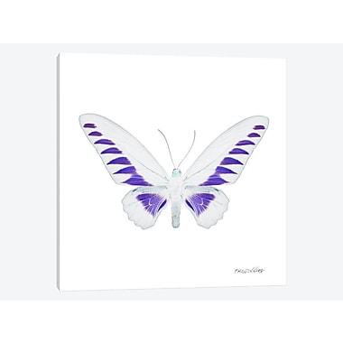 East Urban Home 'Miss Butterfly X-Ray IV' Graphic Art Print on Canvas; 37'' H x 37'' W x 0.75'' D