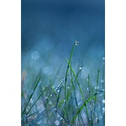 East Urban Home 'Blue Dew' Photographic Print on Canvas; 26'' H x 18'' W x 0.75'' D