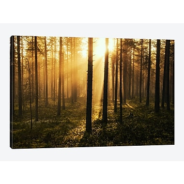 East Urban Home 'Forest of Light' Photographic Print on Canvas; 26'' H x 40'' W x 0.75'' D