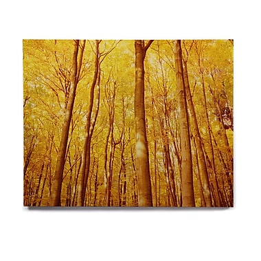 East Urban Home 'Forest Colors' Photographic Print on Wood; 8'' H x 10'' W x 1'' D