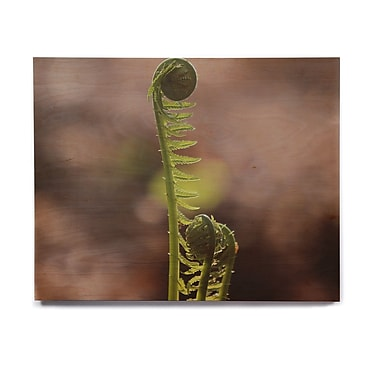East Urban Home 'Fern Top' Graphic Art Print on Wood; 8'' H x 10'' W x 1'' D