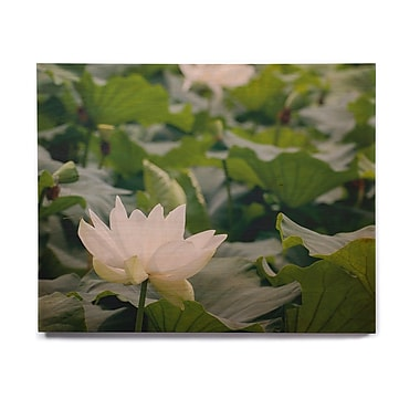 East Urban Home 'White Lotus' Photographic Print on Wood; 16'' H x 20'' W x 1'' D
