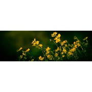 Red Barrel Studio 'Wild Flowers Panoramic' Photographic Print on Wrapped Canvas