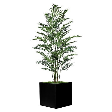 Bayou Breeze Square Palm Tree in Planter; Black