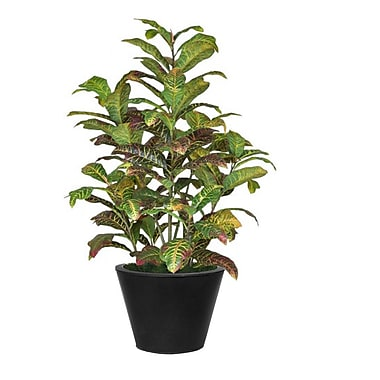 Bayou Breeze Green and Red Croton Plant in Planter; Black