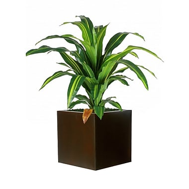Brayden Studio Dracaena Sprout Silk Plant in Planter; Brown