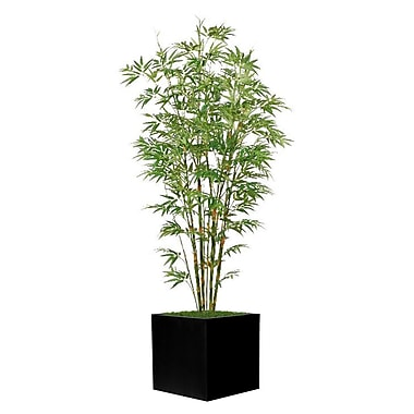 World Menagerie Square Bamboo Tree in Planter; Black
