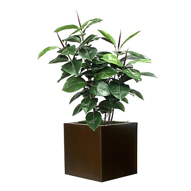 Brayden Studio Rubber Foliage Plant in Planter; Brown