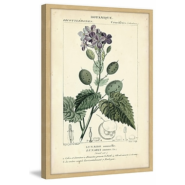 Gracie Oaks 'Botanique Study in Lavender III' Framed Graphic Art Print; 36'' H x 24'' W x 1.5'' D
